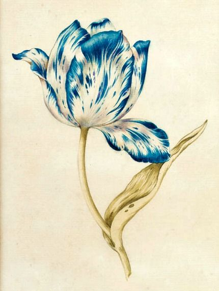 (Dutch)  Blue and White Tulip  17th century (this would make a really pretty tattoo!