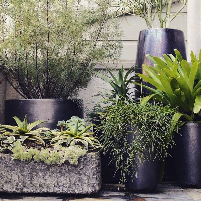 """Stunning pot cluster. So lush and green. #potplant #potcluster #balconygarden…"