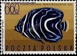 ryby egzotyczne 1967r