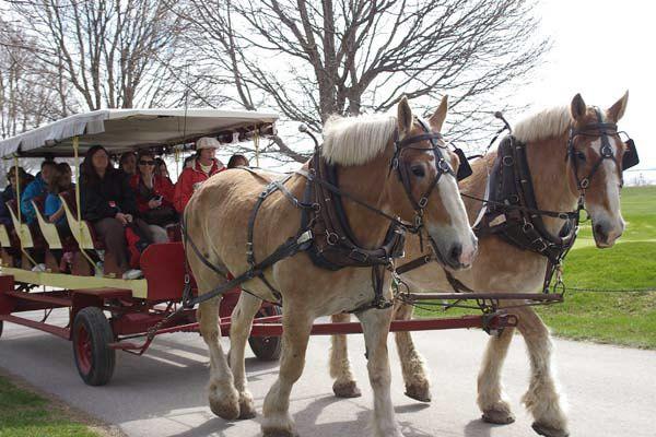 Carriage Tours Inc.