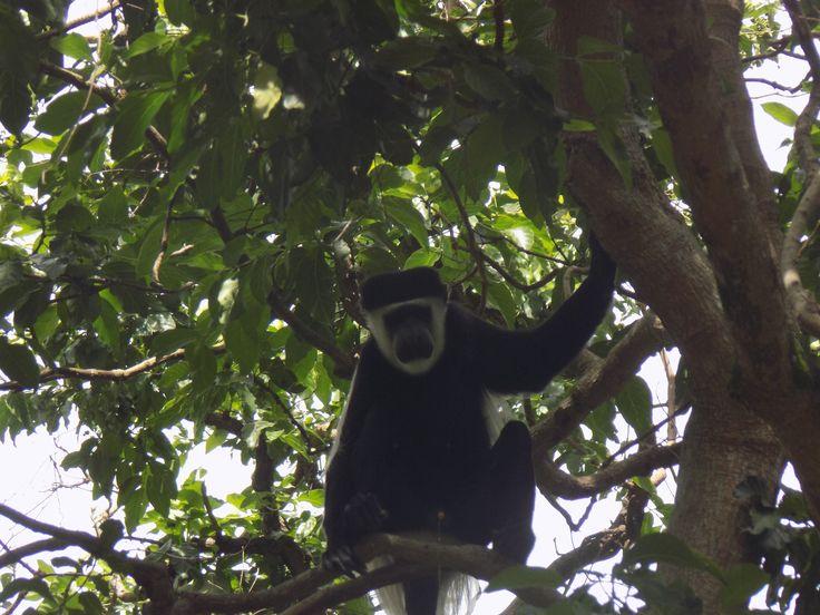 Uganda Wildlife and Cultural Safari, 16 Days 15 Nights price range from USD$3994