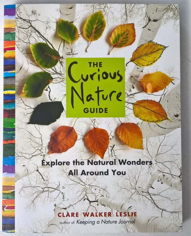 The Curious Nature Guide. Explore the natural wonders all around you by Clare Walker Leslie. Read the full review on The Curriculum Choice