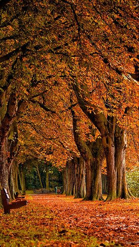 autumn_leaves_park_trees