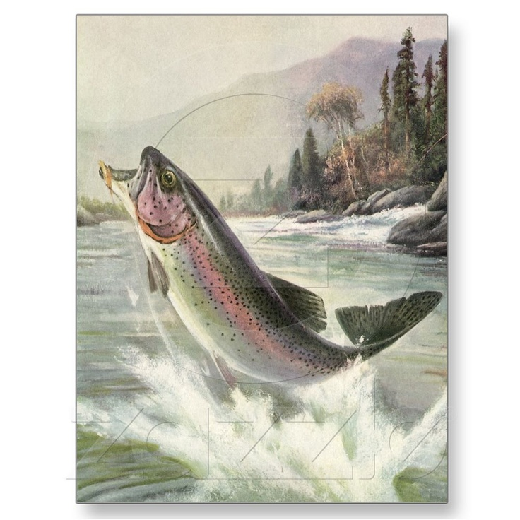 Vintage Rainbow Trout Fish Fisherman Fishing Post Cards at Zazzle.ca