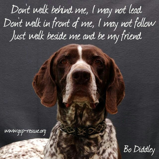 Even though the picture is a beautiful Gsp This is true of all dogs.