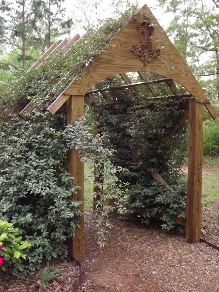 my garden arbor covered with elaeagnus