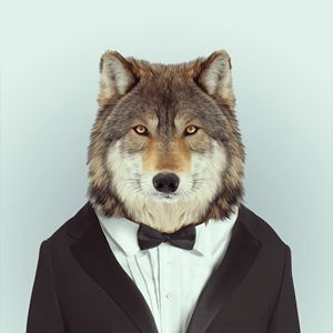 Zoo Portraits - Wolf  Fun, beautiful art and a unique gift idea!