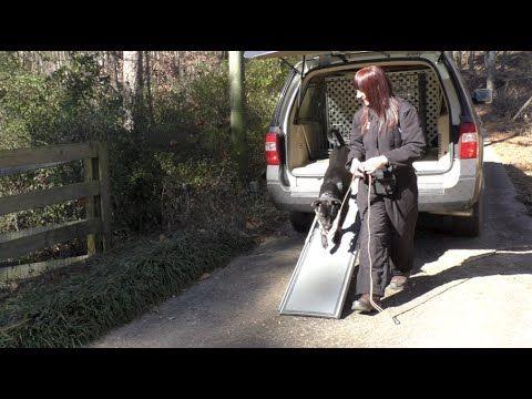 Board and Train, Jetta, Lab Mix, Day 4: Teaching Fearful Dog Car Ramp - YouTube