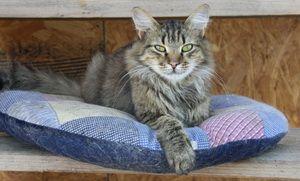 Мустанг уехал в новый дом 18 июля 2011 г. - не Кузя.