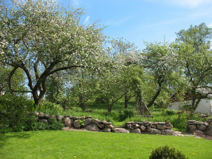 Fruktträdgård