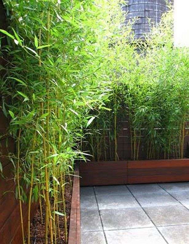 Bamboo Garden Ideas Backyards 3 Bamboo Garden Garden Privacy