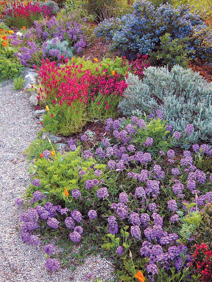The Fire-Safe Cottage Garden 'Homestead' verbena (Verbena x hybrida 'Homestead') and annual Linaria carpet the ground, and keep the risk of fire low in the Garden Zone. Author's photographs