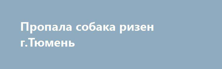 Пропала собака ризен г.Тюмень http://poiskzoo.ru/board/read30404.html  POISKZOO.RU/30404 Потеряна ризеншнауцер, сука, окрас перец с солью (серая) в Тюмени в ..-м заречном. Заросшая, густая борода, усы, брови. .. см в холке. Хвост и уши купированы. Есть клеймо. позвоните ...  РЕПОСТ! @POISKZOO2 #POISKZOO.RU #Пропала #собака #Пропала_собака #ПропалаСобака #Тюмень