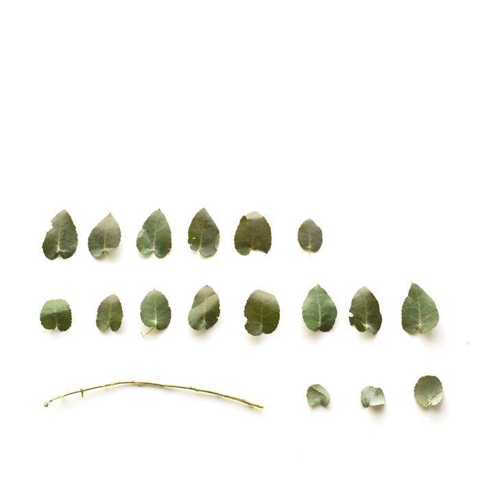 Sarah Blythe - Deconstructing Flora 2011 - Light Journeys: Australian Women Artists www.sarahblythe.com