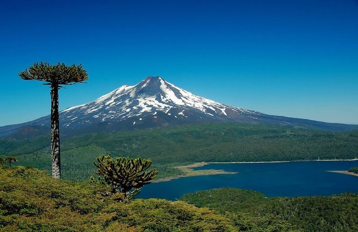 Conguillío National Park. The scenery of the Araucania Region offers many mountains, lakes and lagoons. The majestic Llaima volcano, one of the most active in South America, dominates the landscape. The park has a very diverse fauna, and its vegetation includes the last remnants of the flora of the Upper Cretaceous.