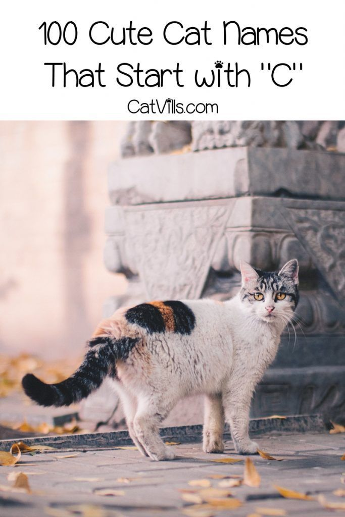 100 Cat Names That Start With C In 2020 Cute Cat Names Cat Names Pets