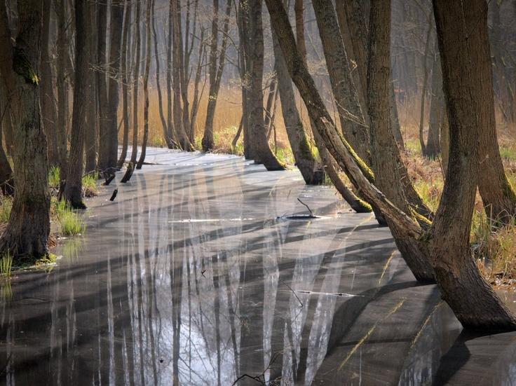 water alley  By: Dirk Juergensen