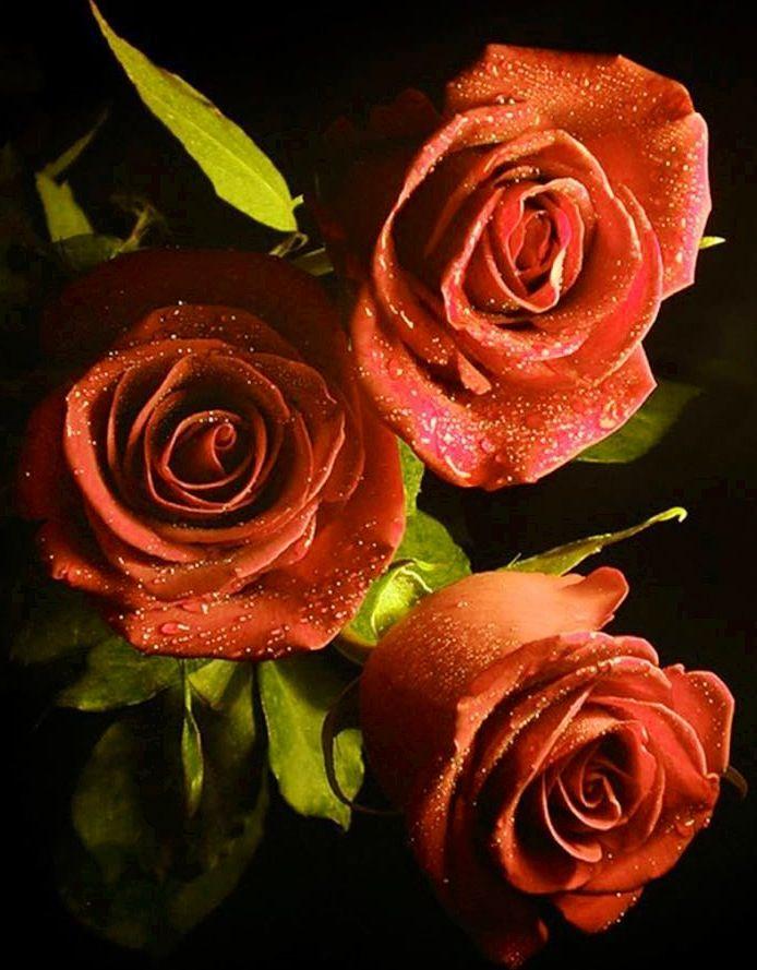 toko bunga aakflorist.com bekasi selatan http://www.aakflorist.com/