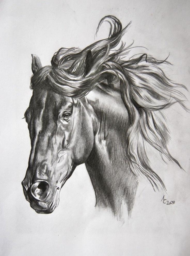 крыса эскизы картинки с лошадьми это