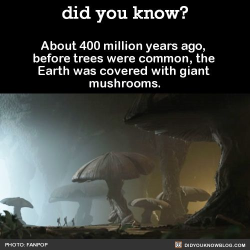 About 400 million years ago, before trees were common, the Earth was covered with giant mushrooms. Source