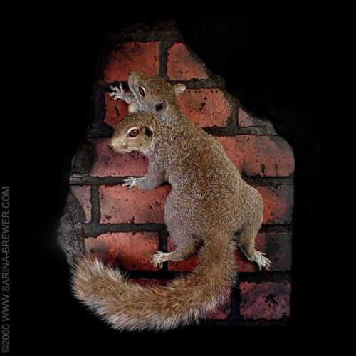 """""""CONCRETE JUNGLE"""" ©2000 www.Sarina-Brewer.com. A Rogue Taxidermy sculpture by artist Sarina Brewer, taxidermy art movement co-founder & pioneer. See the work that was the catalyst for the art movement at https://www.facebook.com/Rogue.Taxidermy.Art/ #Rogue #Taxidermy #Art #two #Headed #Freak #Squirrel"""