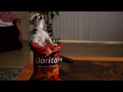Best Dog Commercials of the Super Bowl - Doritos