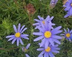 encuentra este pin y muchos ms en flores y jardines de