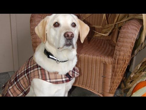 A bit lengthy & slow at times but a good reference for making your own dog vest.  I would adjust the pattern to be a little larger or cover the dogs belly, but this is a good start.