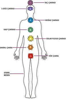 Çakra, Sanskritçe'de tekerlek anlamına gelir, ateş çarkı da denir. Bedenimizin içerisinde çakralar olarak bilinen yedi temel enerji merkezi hormonal salgı bezlerinin ve büyük sinir ağlarının …