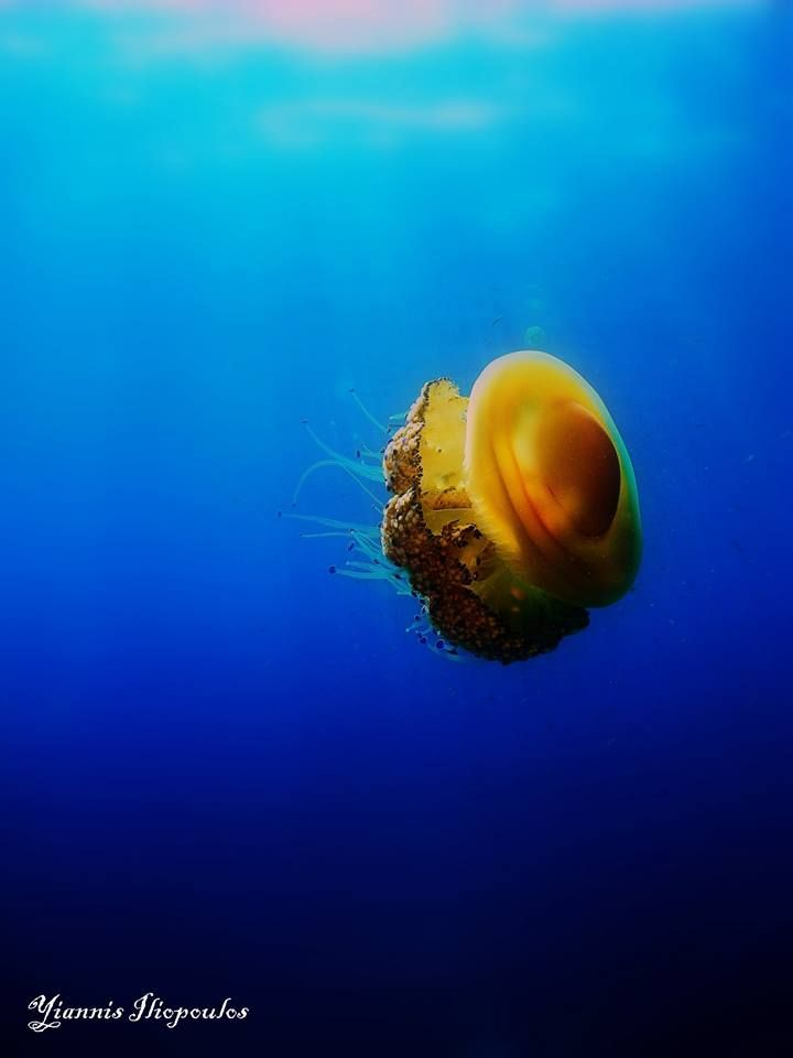 just wandering around... --Athos Scuba Diving center