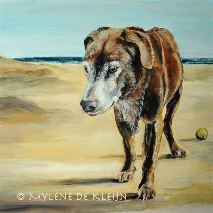 Oude labrador