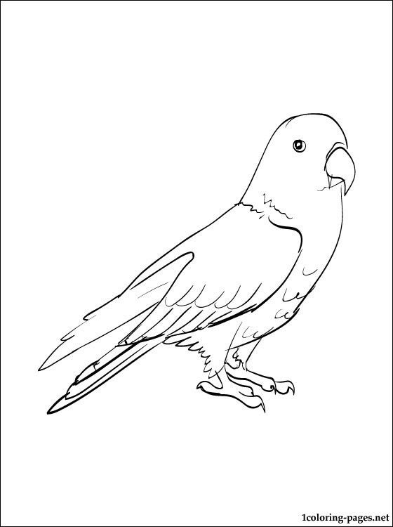 Eclectus Line Drawing Coloring Pages 5