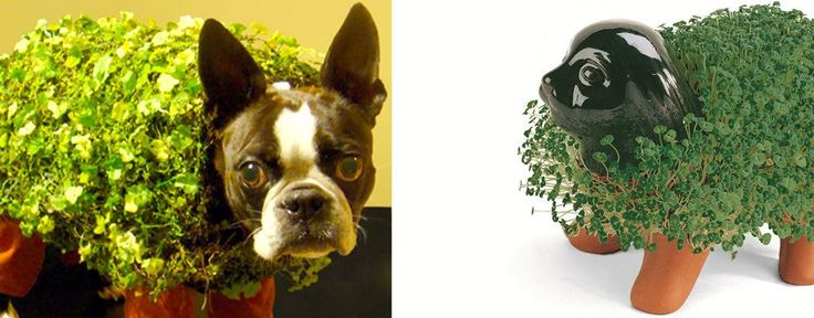best 20  chia pet ideas on pinterest