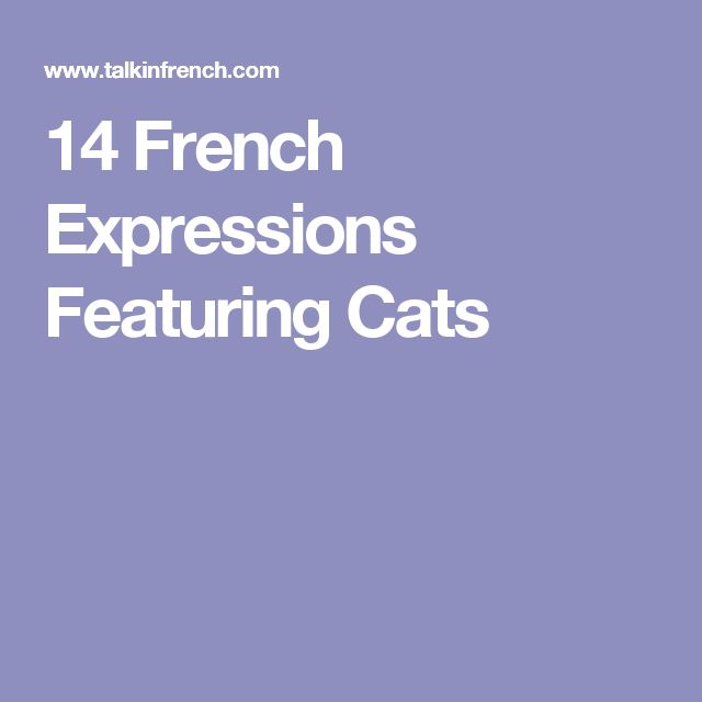 14 French Expressions Featuring Cats