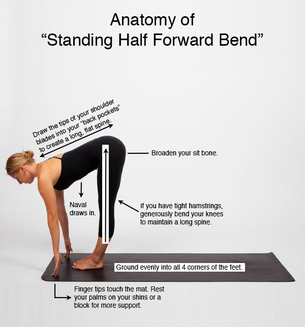 "Anatomy of ""Standing Half Forward Bend"""