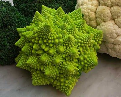 * Romanesco broccoli fractals *