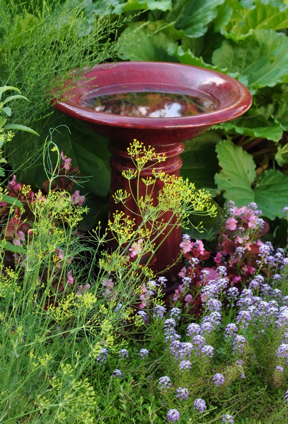 Love how the begonia reflects the color of the birdbath.