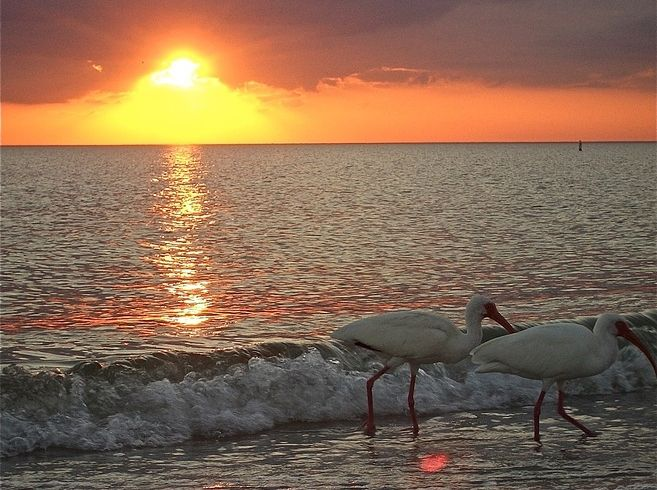 Image result for family places to visit in venice fl