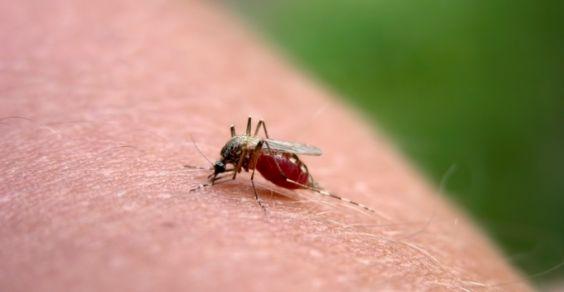 punture di zanzare: rimedi naturali