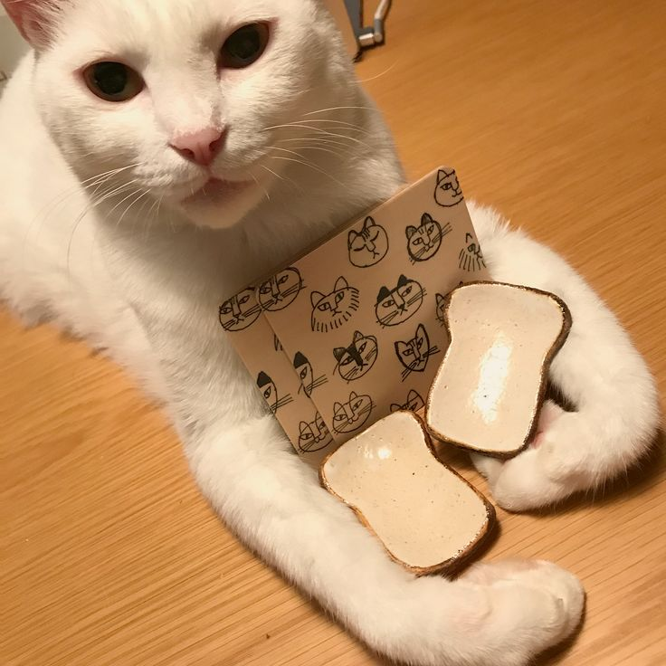 3連勤をカレーで乗り切る(楽するw) 2枚目→→ 最近買ったコースターと、マリチャン( @inaho_cat )がお土産にくれた、食パン型の箸置き兼・プチ豆皿スプーン置くのにちょうどイイ♩ #カレー #八おこめ #ねこ部 #cat #ねこ #八おこめ食べ物
