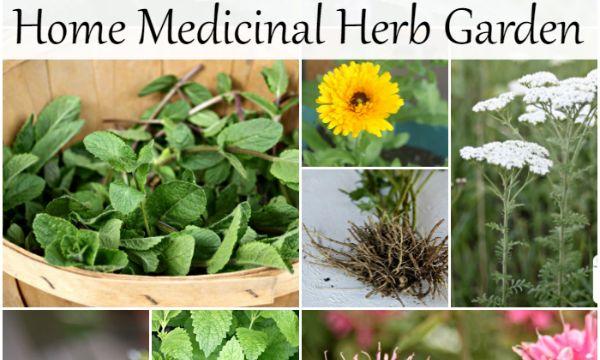 Felejtsd el a egzotikus és kezdődik a 10 növény a hazai gyógynövény kert házi…