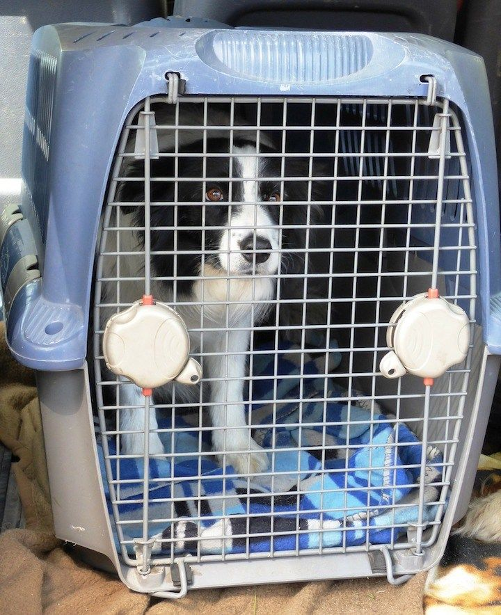 Help How Do I Stop My Dog From Crying In The Crate Dog Crying