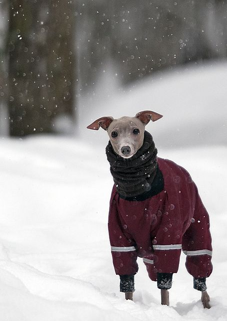 happy I live an Florida and don't have to bundle up my dog like this