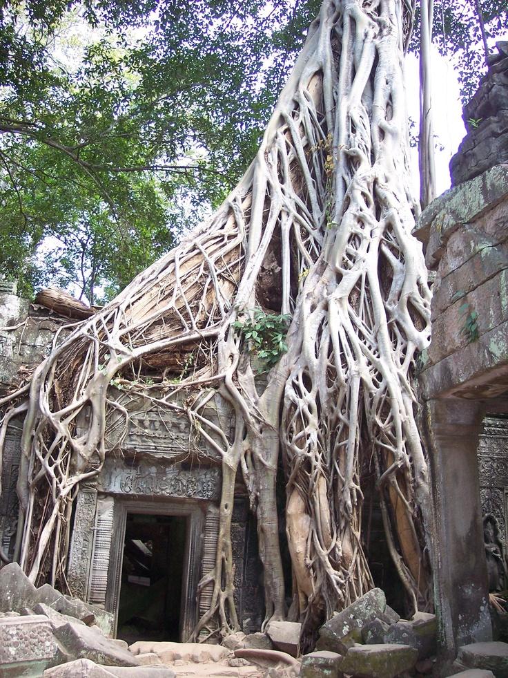 Ta Prohm temple , Siem Reap.