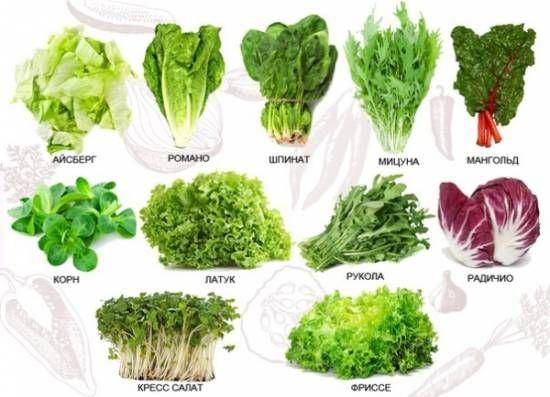 Разновидности салата семена