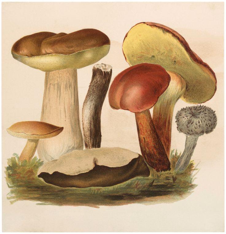 На что похож гриб картинки