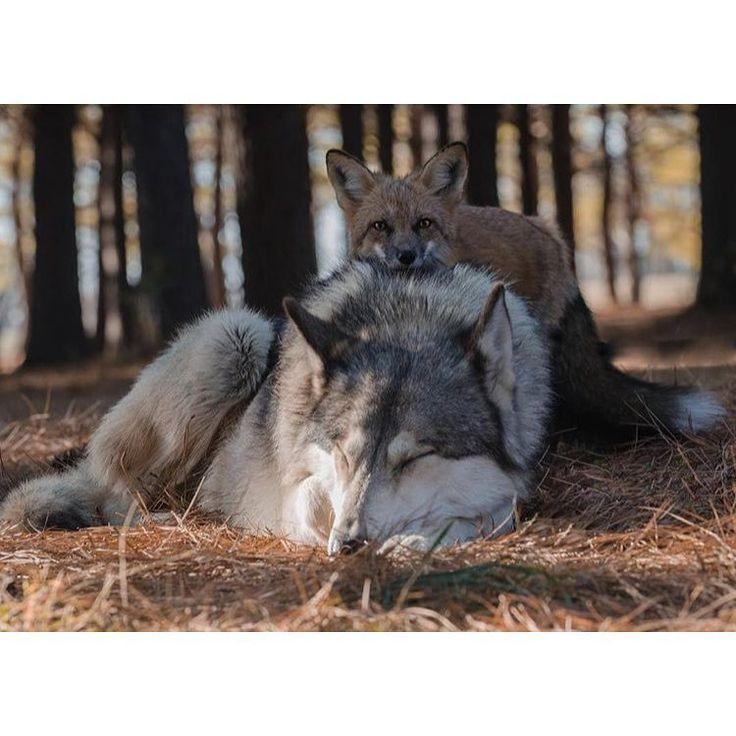 Love this by @afoxandthewolf #shoutout #bestfriends