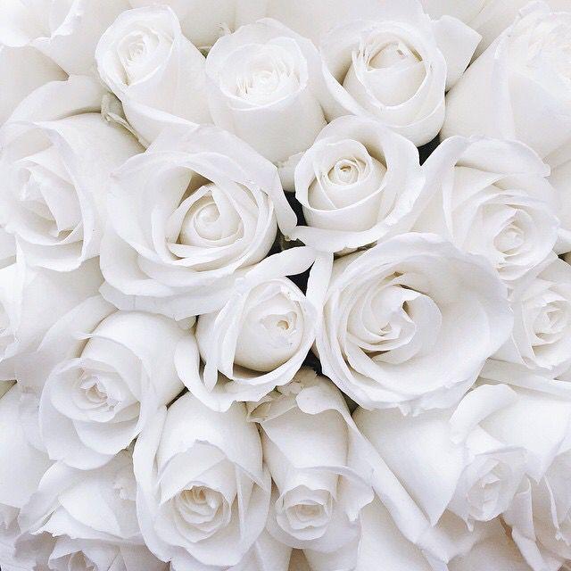 Flower Roses Pinterest: Pinterest, IG, Twitter ‡� @kkatieclaire