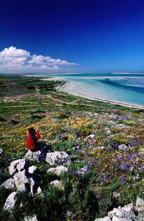 Hike through wildflowers to the most beautiful waters at Langebaan! Like this photo if you want to go!