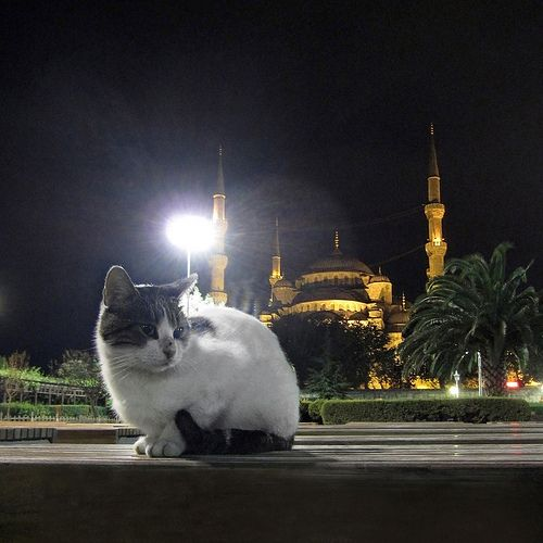 Hanging out at the Blue Mosque, Istanbul (a cat portrait)